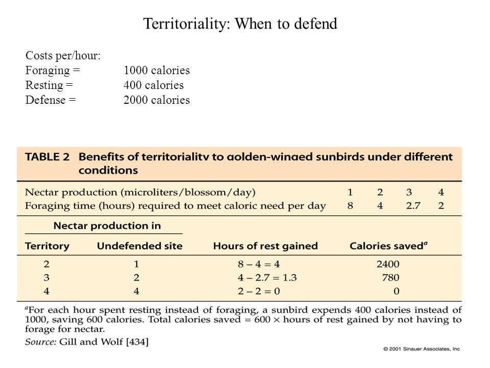 Costs per/hour: Foraging = 1000 calories Resting = 400 calories Defense =2000 calories Territoriality: When to defend