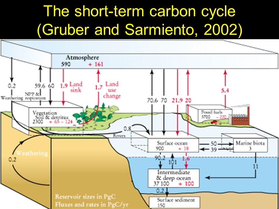 The short-term carbon cycle (Gruber and Sarmiento, 2002)