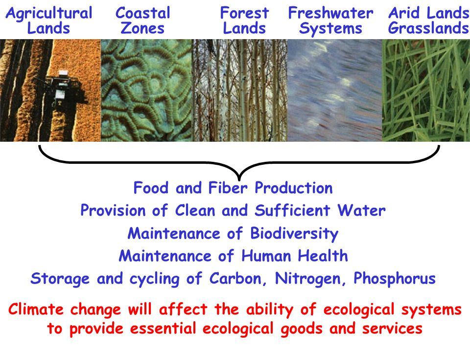 Food and Fiber Production Provision of Clean and Sufficient Water Maintenance of Biodiversity Maintenance of Human Health Storage and cycling of Carbon, Nitrogen, Phosphorus Agricultural Lands Coastal Zones Forest Lands Freshwater Systems Arid Lands Grasslands Climate change will affect the ability of ecological systems to provide essential ecological goods and services