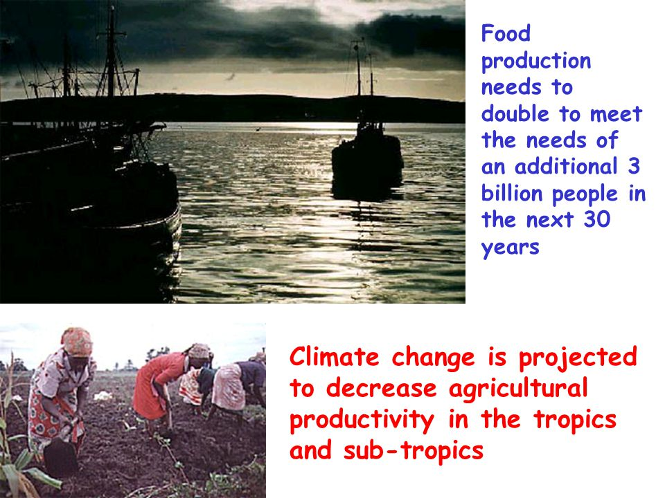Food production needs to double to meet the needs of an additional 3 billion people in the next 30 years Climate change is projected to decrease agric