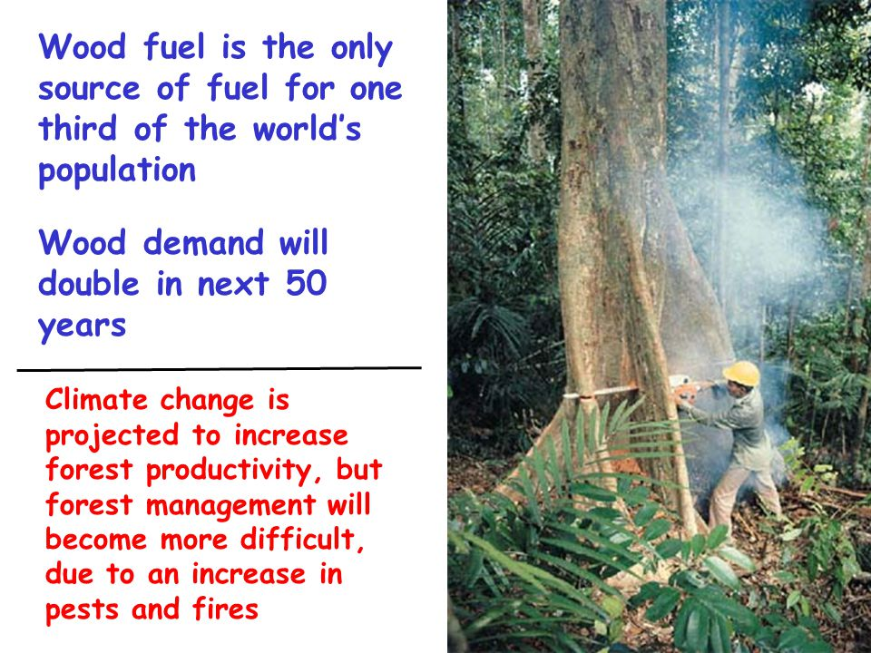 Wood fuel is the only source of fuel for one third of the world's population Wood demand will double in next 50 years Climate change is projected to i