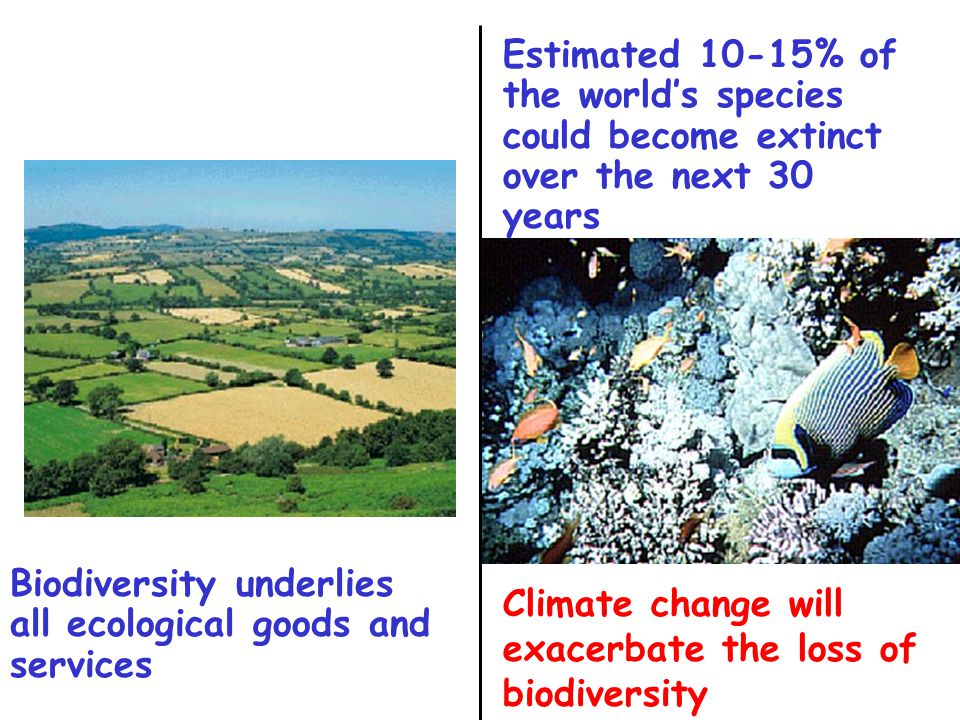 Climate change will exacerbate the loss of biodiversity Estimated 10-15% of the world's species could become extinct over the next 30 years Biodiversi