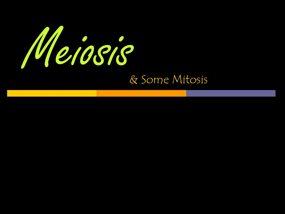 Recap: How is Meiosis different than Mitosis?