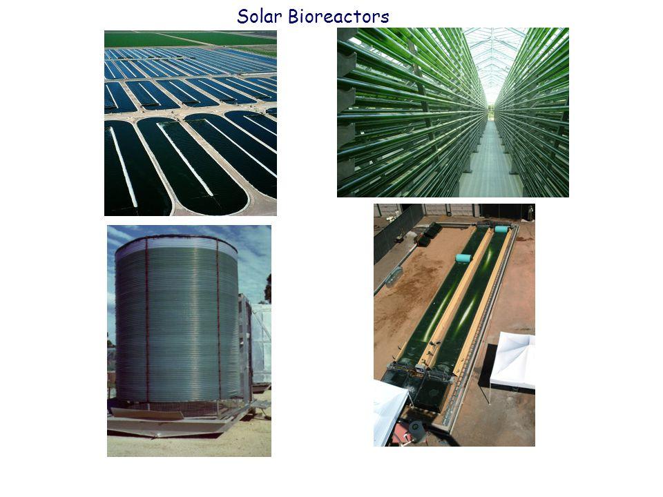 Solar Bioreactors