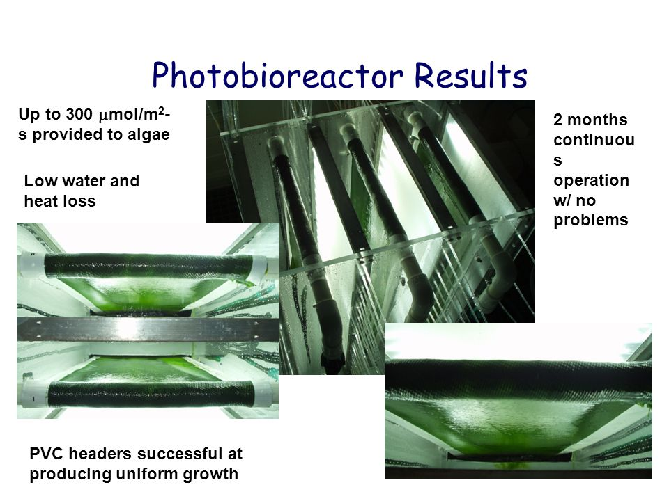 Photobioreactor Results Up to 300  mol/m 2 - s provided to algae PVC headers successful at producing uniform growth 2 months continuou s operation w/ no problems Low water and heat loss
