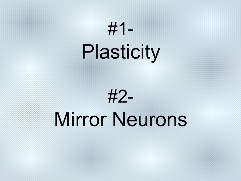 #1- Plasticity #2- Mirror Neurons