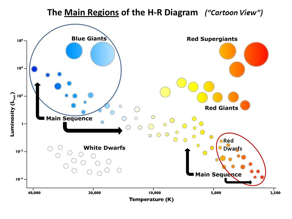 The Main Regions of the H-R Diagram ( Cartoon View ) Red Dwarfs