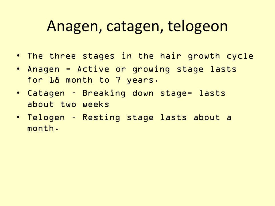 Anagen, catagen, telogeon The three stages in the hair growth cycle Anagen - Active or growing stage lasts for 18 month to 7 years. Catagen – Breaking