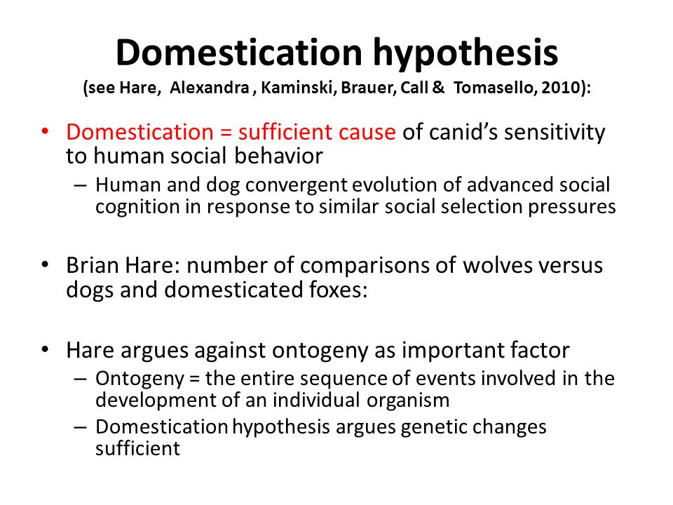 Domestication hypothesis (see Hare, Alexandra, Kaminski, Brauer, Call & Tomasello, 2010): Domestication = sufficient cause of canid's sensitivity to human social behavior – Human and dog convergent evolution of advanced social cognition in response to similar social selection pressures Brian Hare: number of comparisons of wolves versus dogs and domesticated foxes: Hare argues against ontogeny as important factor – Ontogeny = the entire sequence of events involved in the development of an individual organism – Domestication hypothesis argues genetic changes sufficient