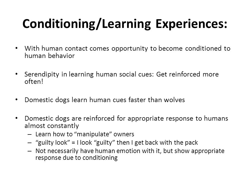 Conditioning/Learning Experiences: With human contact comes opportunity to become conditioned to human behavior Serendipity in learning human social cues: Get reinforced more often.
