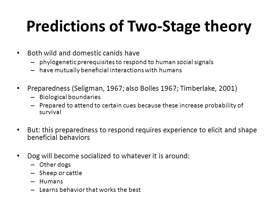 Predictions of Two-Stage theory Both wild and domestic canids have – phylogenetic prerequisites to respond to human social signals – have mutually beneficial interactions with humans Preparedness (Seligman, 1967; also Bolles 1967; Timberlake, 2001) – Biological boundaries – Prepared to attend to certain cues because these increase probability of survival But: this preparedness to respond requires experience to elicit and shape beneficial behaviors Dog will become socialized to whatever it is around: – Other dogs – Sheep or cattle – Humans – Learns behavior that works the best