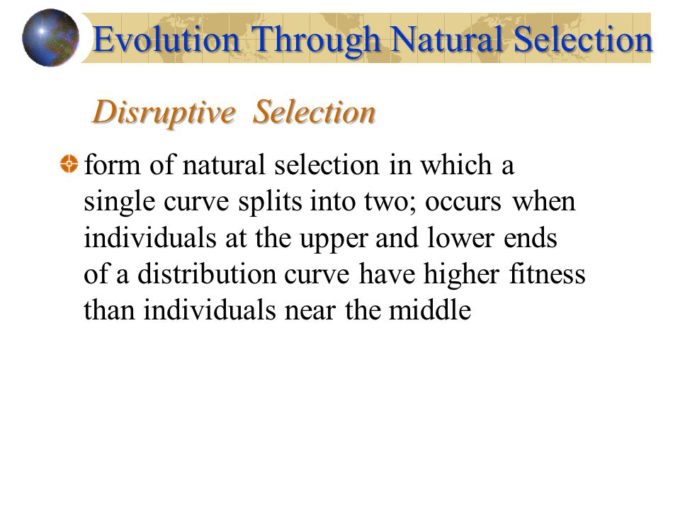 Disruptive Selection form of natural selection in which a single curve splits into two; occurs when individuals at the upper and lower ends of a distr