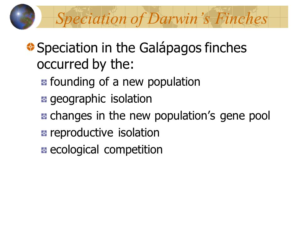 Speciation of Darwin's Finches Speciation in the Galápagos finches occurred by the: founding of a new population geographic isolation changes in the n