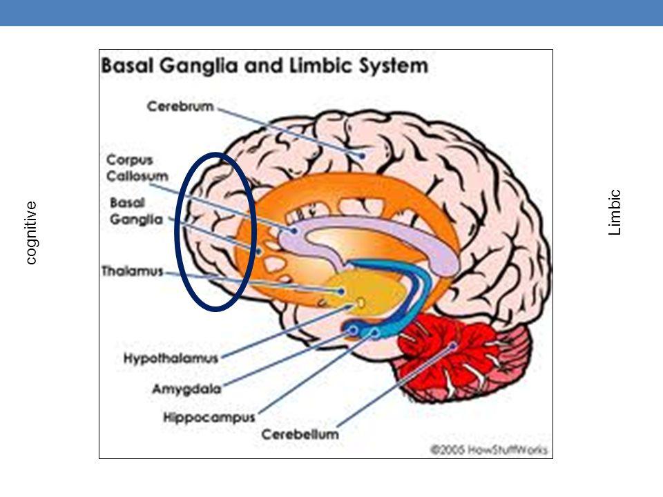 Limbic cognitive