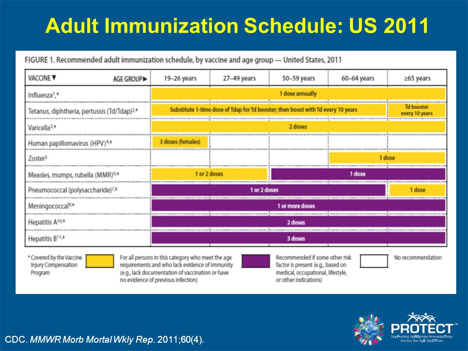 Adult Immunization Schedule: US 2011 CDC. MMWR Morb Mortal Wkly Rep. 2011;60(4).