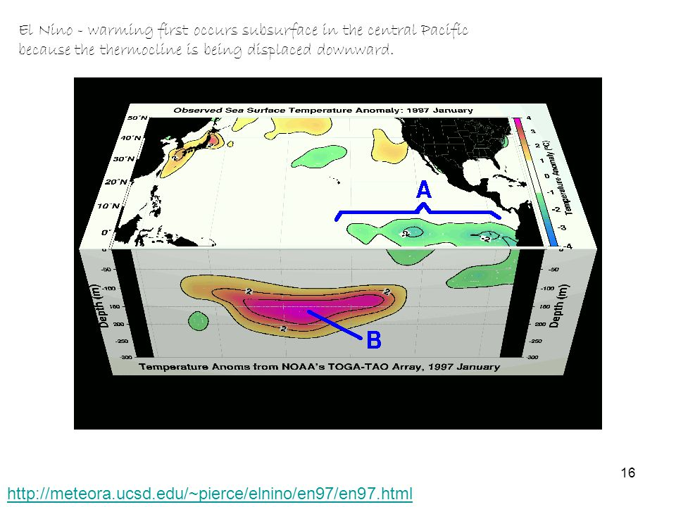 http://meteora.ucsd.edu/~pierce/elnino/en97/en97.html El Nino - warming first occurs subsurface in the central Pacific because the thermocline is being displaced downward.