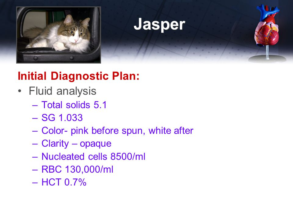Jasper Initial Diagnostic Plan: Fluid analysis –Total solids 5.1 –SG 1.033 –Color- pink before spun, white after –Clarity – opaque –Nucleated cells 85