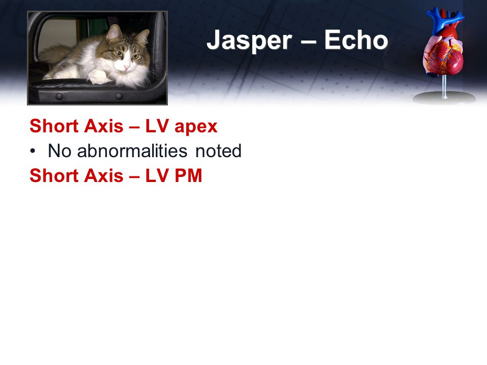 Jasper – Echo Short Axis – LV apex No abnormalities noted Short Axis – LV PM