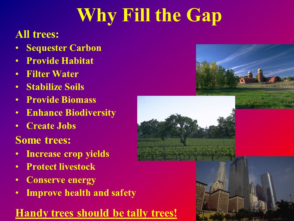 Why Fill the Gap All trees: Sequester Carbon Provide Habitat Filter Water Stabilize Soils Provide Biomass Enhance Biodiversity Create Jobs Some trees: Increase crop yields Protect livestock Conserve energy Improve health and safety Handy trees should be tally trees!
