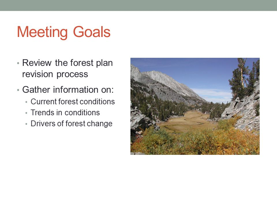 Meeting Goals Review the forest plan revision process Gather information on: Current forest conditions Trends in conditions Drivers of forest change