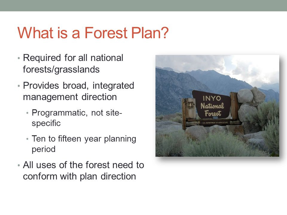 What is a Forest Plan.