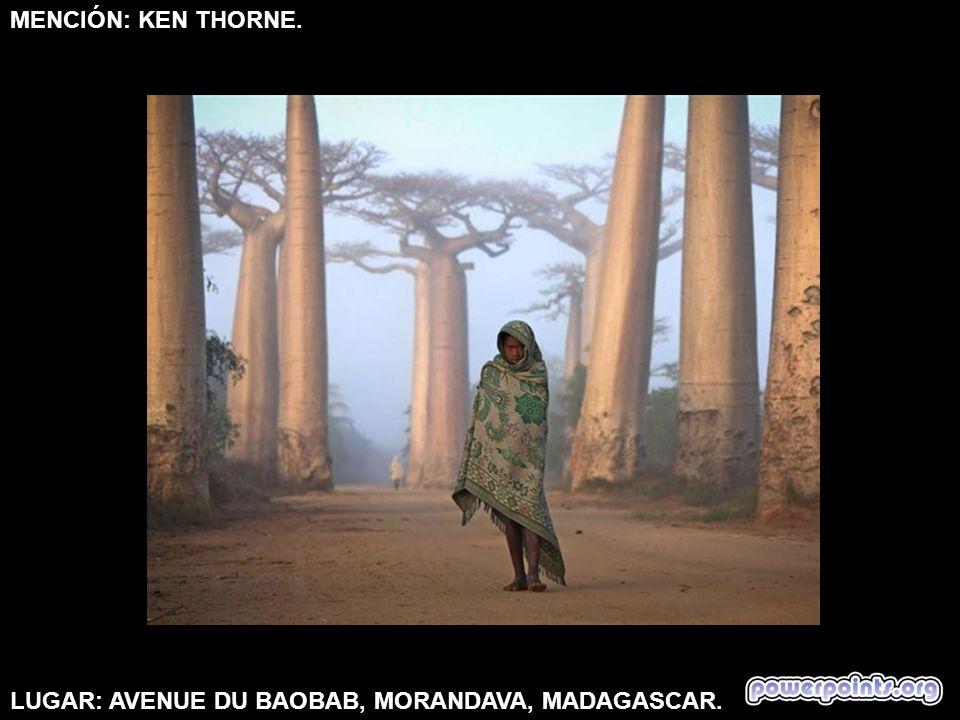 MENCIÓN: KEN THORNE. LUGAR: AVENUE DU BAOBAB, MORANDAVA, MADAGASCAR.