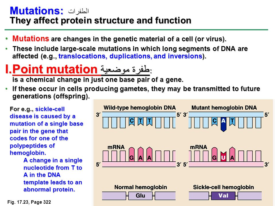 12 Mutations are changes in the genetic material of a cell (or virus).Mutations are changes in the genetic material of a cell (or virus).