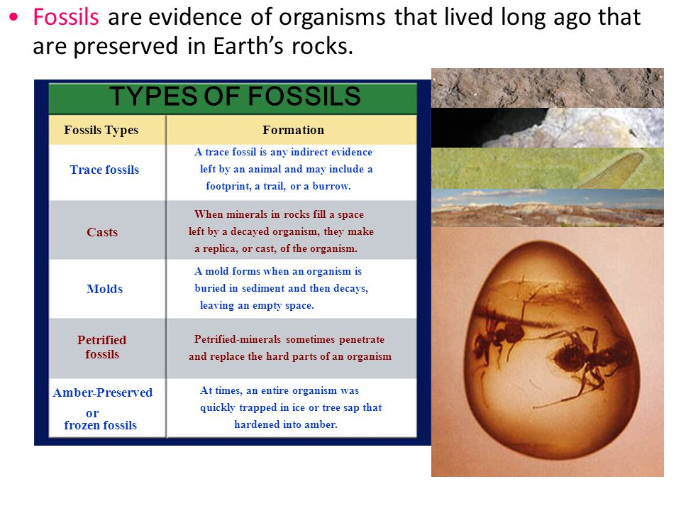 Section 14.1 Summary – pages 369-379 Paleontologists, scientists who study ancient life, are like detectives who use fossils to understand events that happened long ago.
