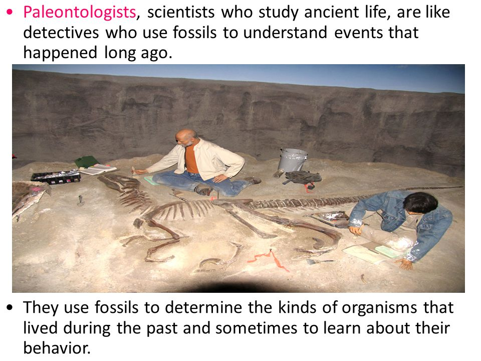 Section 14.1 Summary – pages 369-379 Scientists use carbon-14 to date fossils less than 70 000 years old.