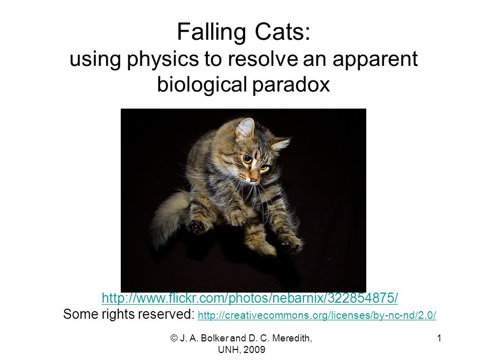 Falling Cats: using physics to resolve an apparent biological paradox http://www.flickr.com/photos/nebarnix/322854875/ http://www.flickr.com/photos/nebarnix/322854875/ Some rights reserved: http://creativecommons.org/licenses/by-nc-nd/2.0/ http://creativecommons.org/licenses/by-nc-nd/2.0/ 1© J.