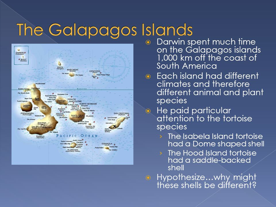  Darwin spent much time on the Galapagos islands 1,000 km off the coast of South America  Each island had different climates and therefore different animal and plant species  He paid particular attention to the tortoise species › The Isabela Island tortoise had a Dome shaped shell › The Hood Island tortoise had a saddle-backed shell  Hypothesize…why might these shells be different?