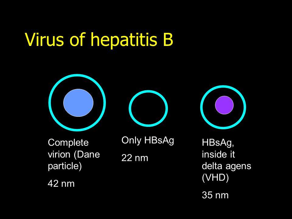 Virus of hepatitis B Complete virion (Dane particle) 42 nm Only HBsAg 22 nm HBsAg, inside it delta agens (VHD) 35 nm