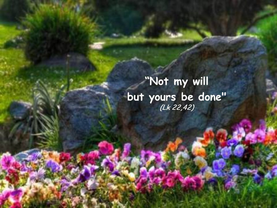 Not my will but yours be done (Lk 22,42)