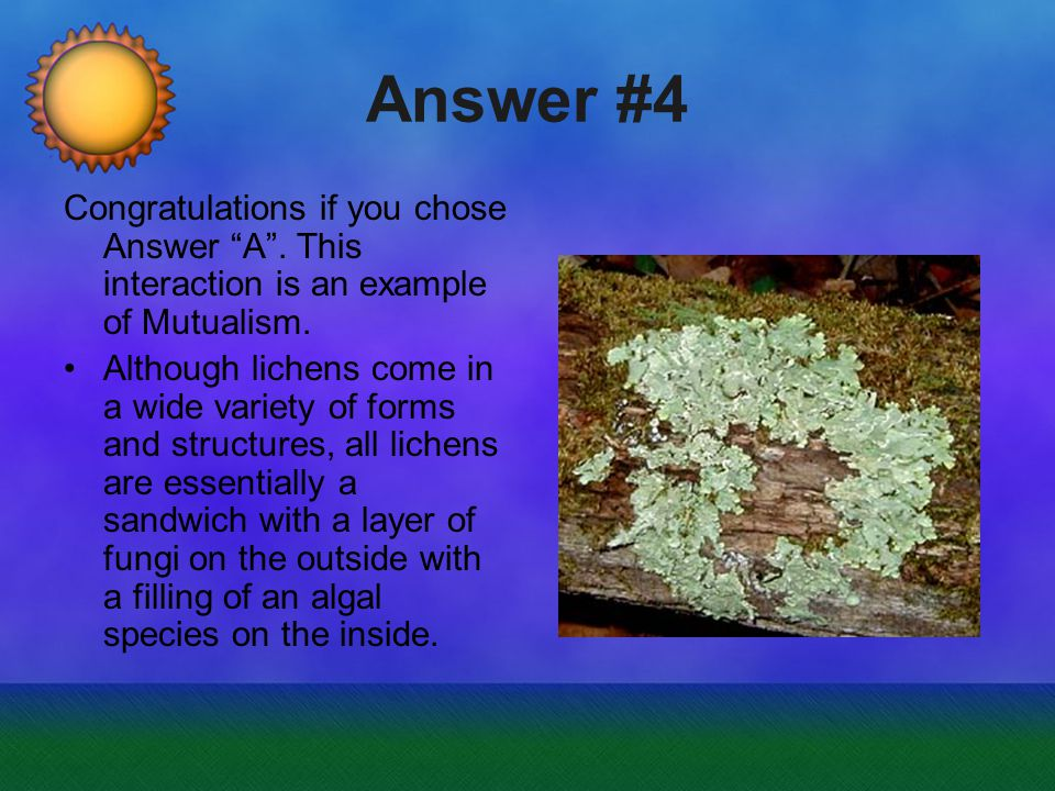 Answer #4 Congratulations if you chose Answer A .