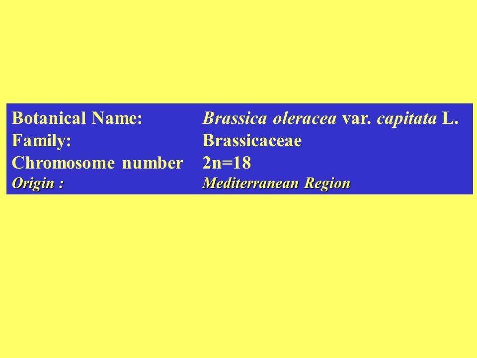 Botanical Name:Brassica oleracea var.capitata L.