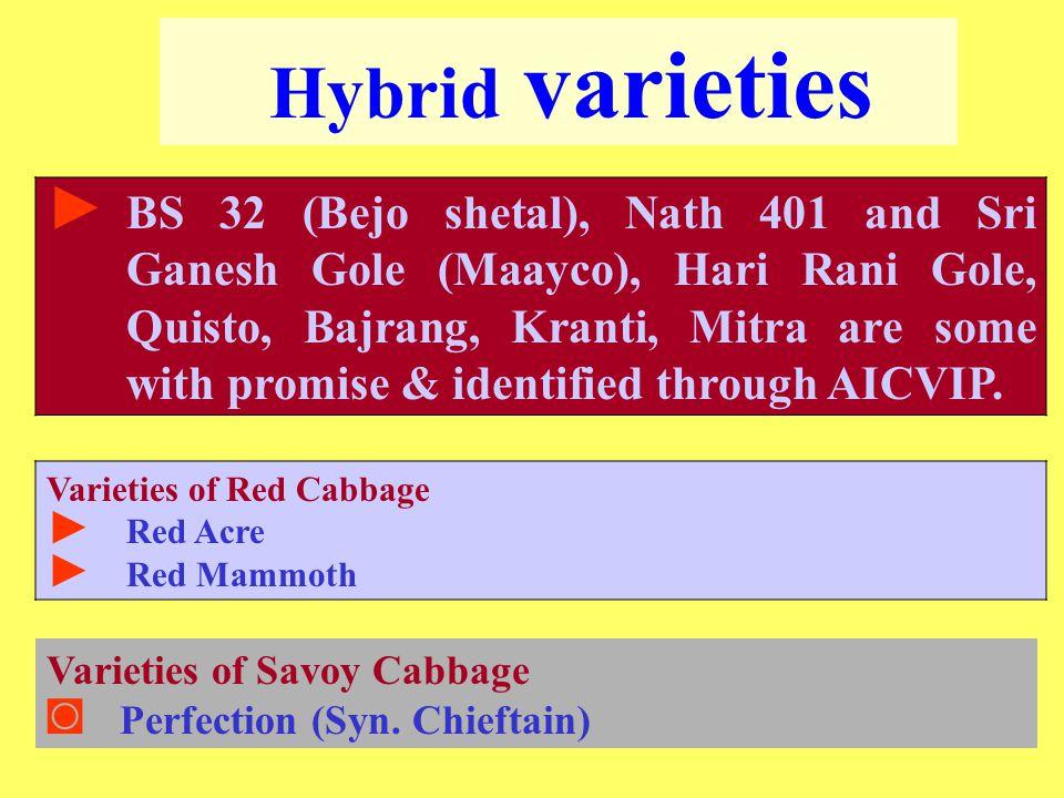 Hybrid varieties ► BS 32 (Bejo shetal), Nath 401 and Sri Ganesh Gole (Maayco), Hari Rani Gole, Quisto, Bajrang, Kranti, Mitra are some with promise & identified through AICVIP.