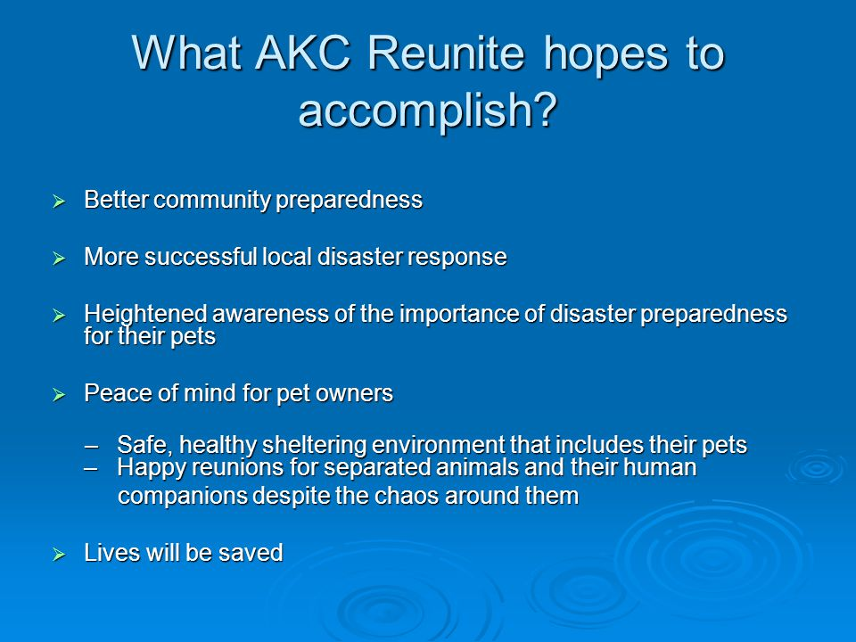 What AKC Reunite hopes to accomplish.