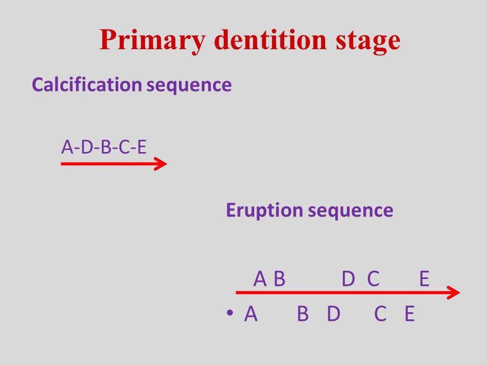 Primary Second Molars Primary Molar Occlusion Mesial Step Distal Step Flush Terminal Plane Anterior Posterior