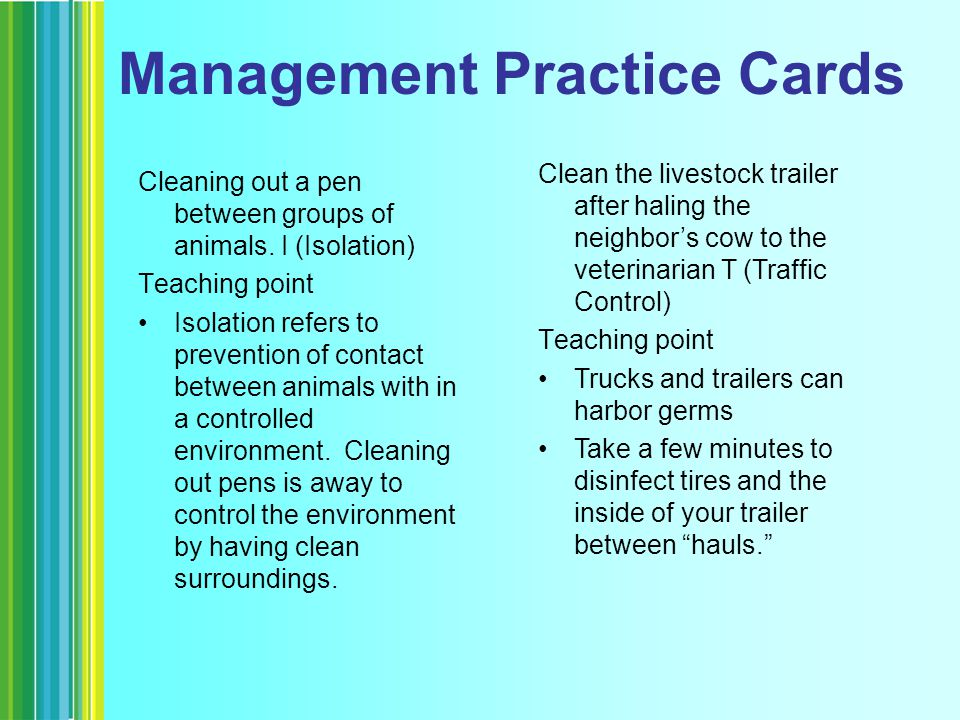 Management Practice Cards Cleaning out a pen between groups of animals.