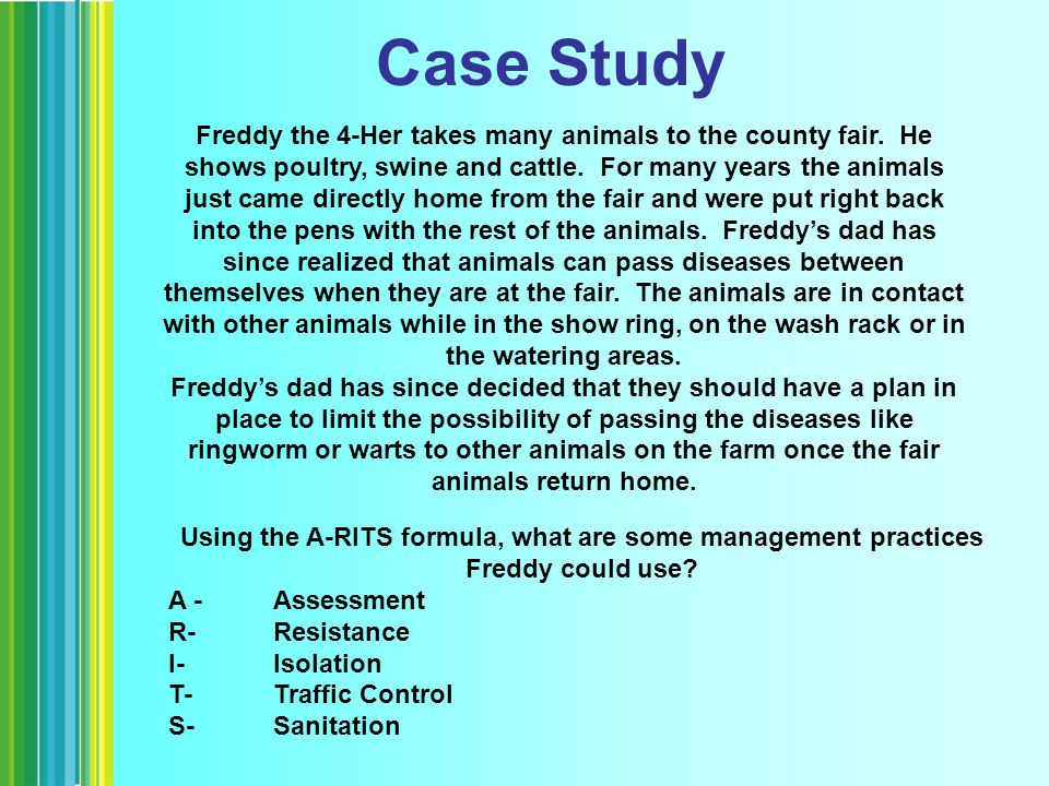 Case Study Freddy the 4-Her takes many animals to the county fair.