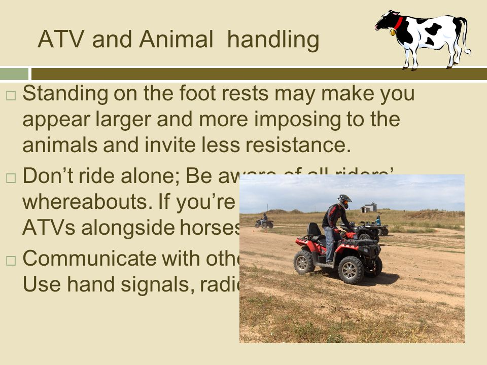 ATV and Animal handling  Standing on the foot rests may make you appear larger and more imposing to the animals and invite less resistance.