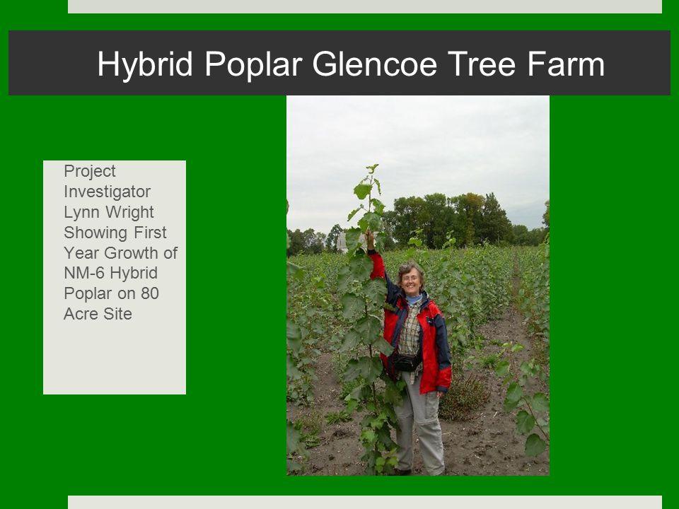 Hybrid Poplar Glencoe Tree Farm Project Investigator Lynn Wright Showing First Year Growth of NM-6 Hybrid Poplar on 80 Acre Site