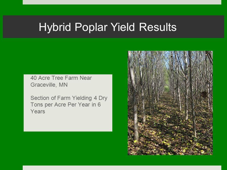 Hybrid Poplar Yield Results 40 Acre Tree Farm Near Graceville, MN Section of Farm Yielding 4 Dry Tons per Acre Per Year in 6 Years