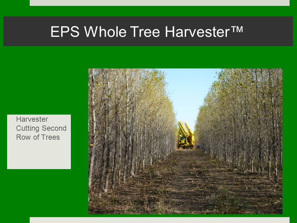 7 EPS Whole Tree Harvester™ Harvester Cutting Second Row of Trees