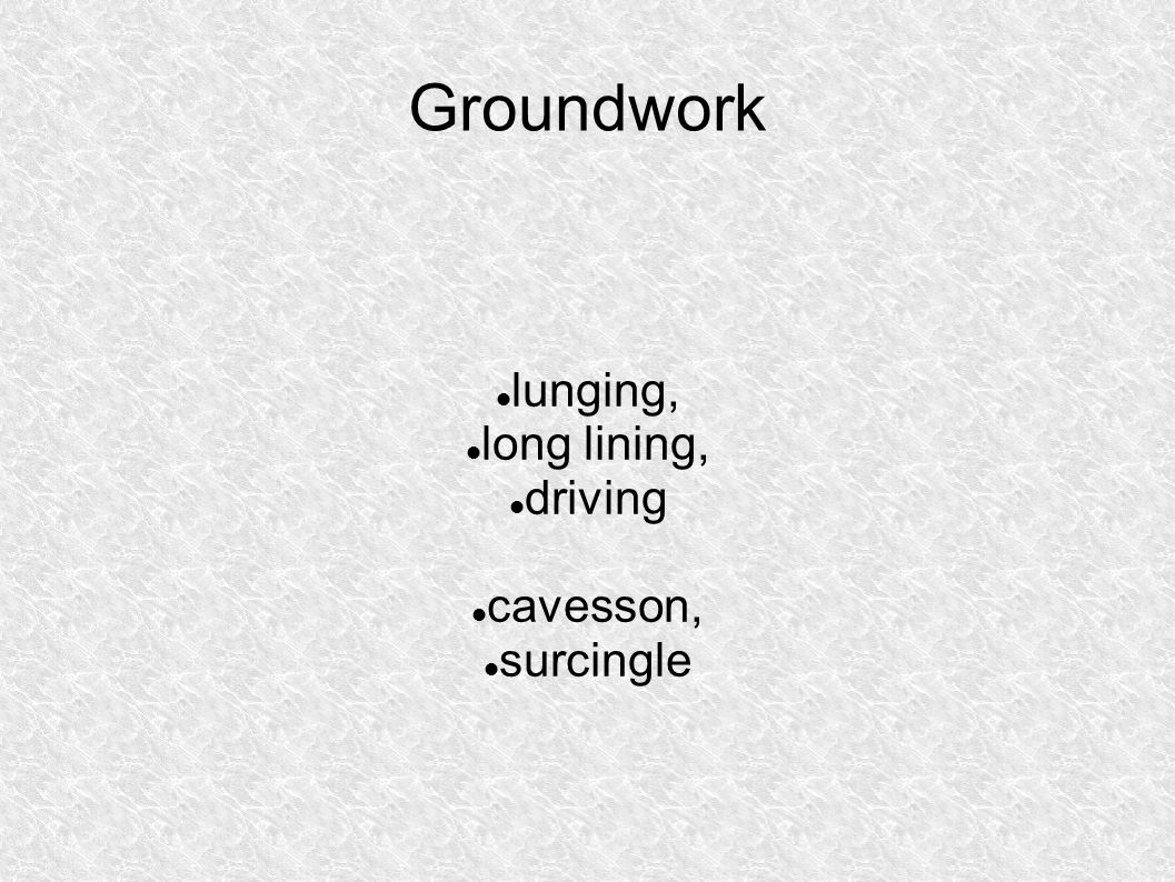 Groundwork lunging, long lining, driving cavesson, surcingle