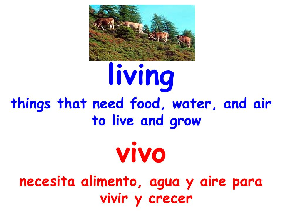 living things that need food, water, and air to live and grow vivo necesita alimento, agua y aire para vivir y crecer