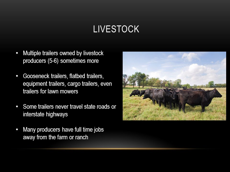 LIVESTOCK Multiple trailers owned by livestock producers (5-6) sometimes more Gooseneck trailers, flatbed trailers, equipment trailers, cargo trailers