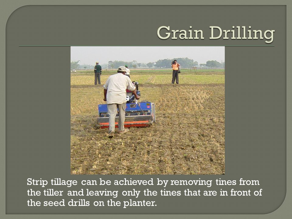 Strip tillage can be achieved by removing tines from the tiller and leaving only the tines that are in front of the seed drills on the planter.