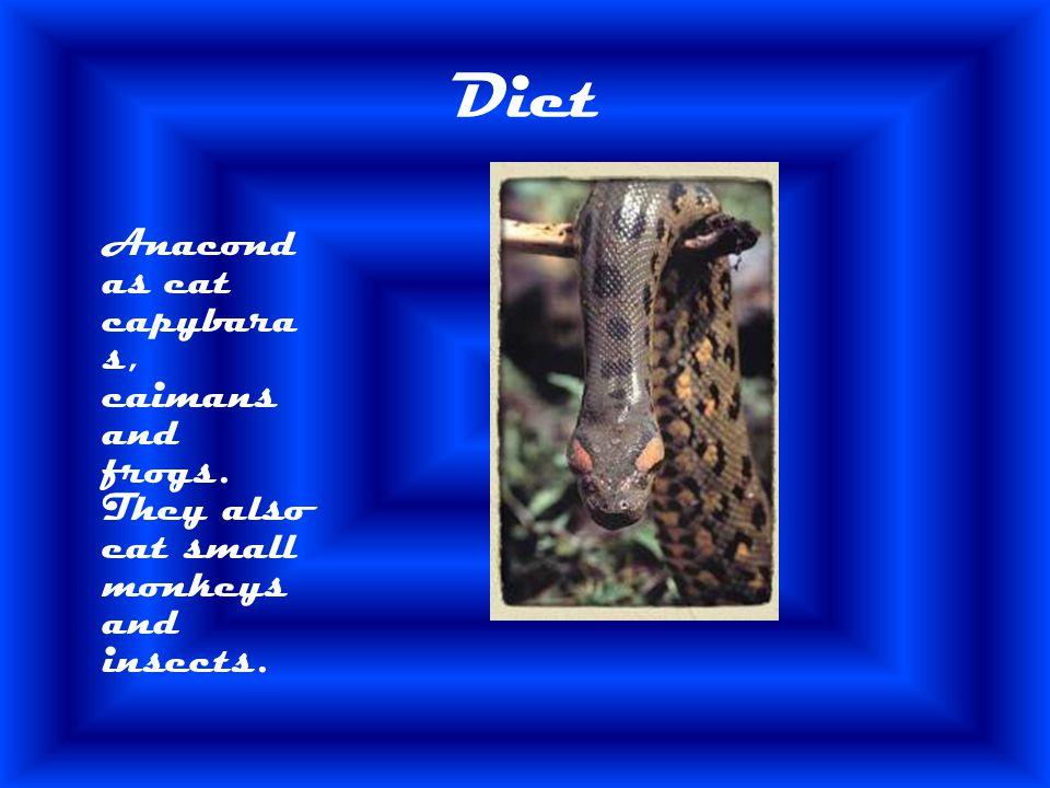 Predator/Prey Anacondas prey is its food. Its predator is the cheetah and the poison dart frog.