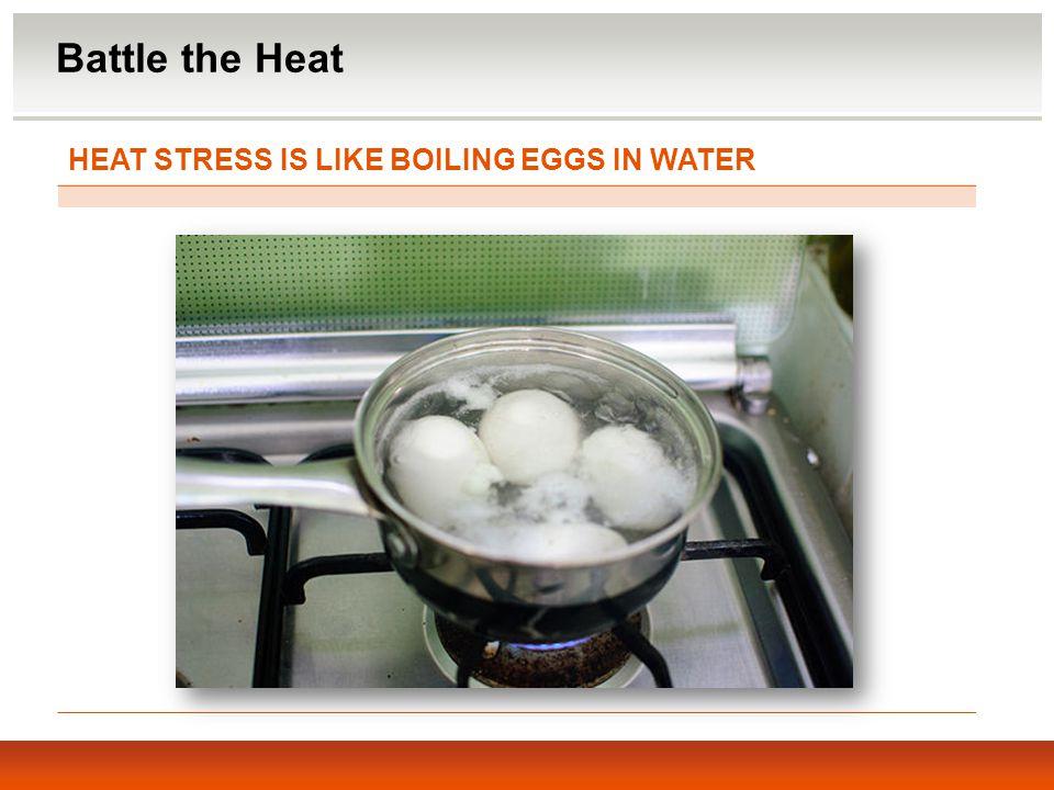 HEAT STRESS IS LIKE BOILING EGGS IN WATER Battle the Heat